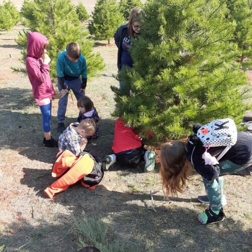 Children pick out live Christmas Tree at Elgin Tree Farm
